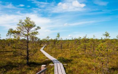 Kemerių nacionalinio parko raisto takas