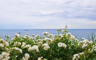 Bulgarija   Roses