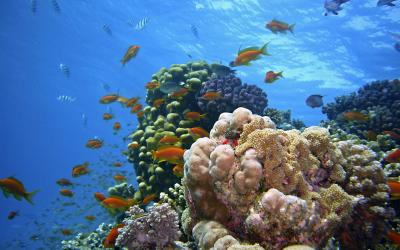 Egypt.underwater