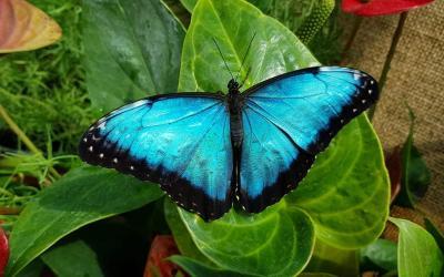 Tervetės drugeliai