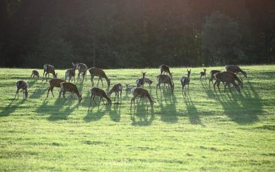 Safari parko gyvūnai